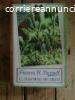 Frances H. Burnett - IL giardino segreto