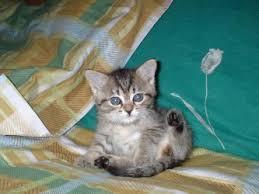 gattini in regalo.