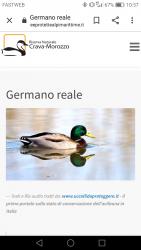 Germani reali - spiumati pronti -
