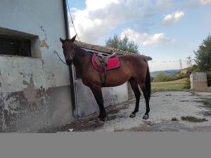 Pensione cavalli