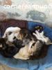 Si regalano cuccioli di gattini