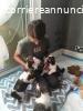 Splendidi cuccioli Shih Tzu.