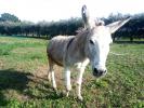 pony e asino